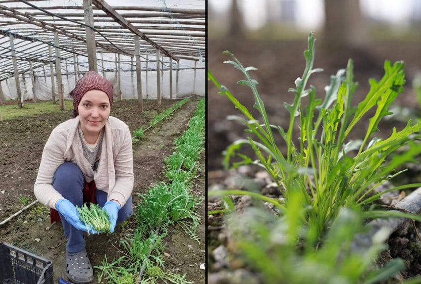 Masuri de criza: Portile fermelor, inchise! Livrarea legumelor direct la domiciliu