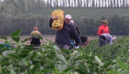 Romania, pe primul loc in UE la angajatii in sectorul agroalimentar