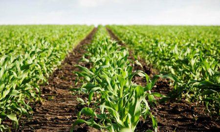 """Agricultorii europeni critica proiectul Green Deal. """"Vor provoca pierderi enorme de productie"""""""