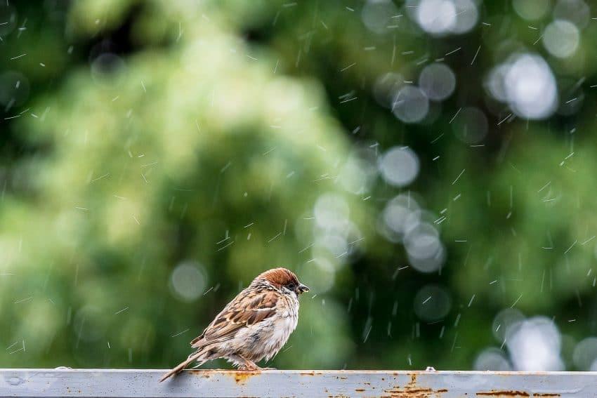 ANM anunta vreme rece in acest weekend. Precipitatii mixte insotite de vant si descarcari electrice