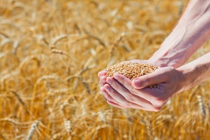 Ne temem de foamete cu graul in hambar. Analiza internationala