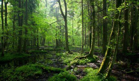 Se pregateste cea mai mare extindere a fondului forestier din ultimii 30 de ani