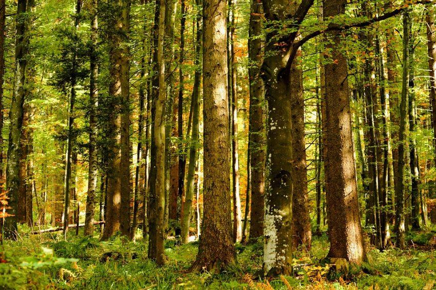 Romania Verde in 10 pasi – PLAN pentru relansarea economiei forestiere