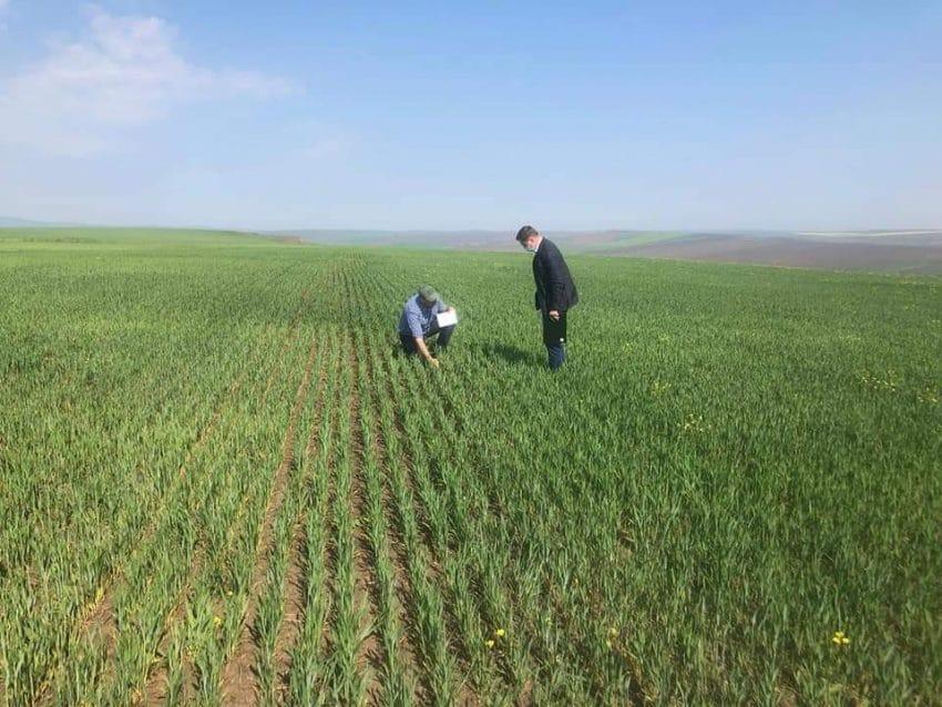 Date oficiale: dimensiunea pagubelor produse de seceta pe judete