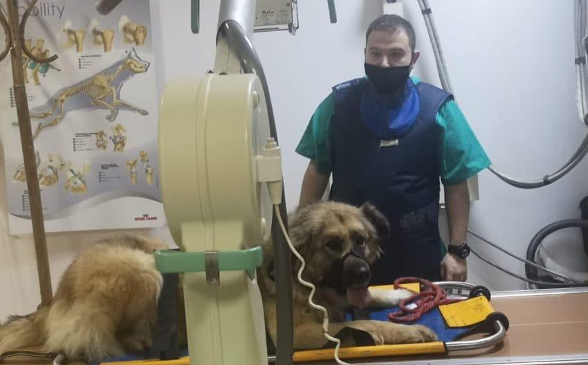 Ce trebuie să știe stăpînii de câini – recomandările specialistului