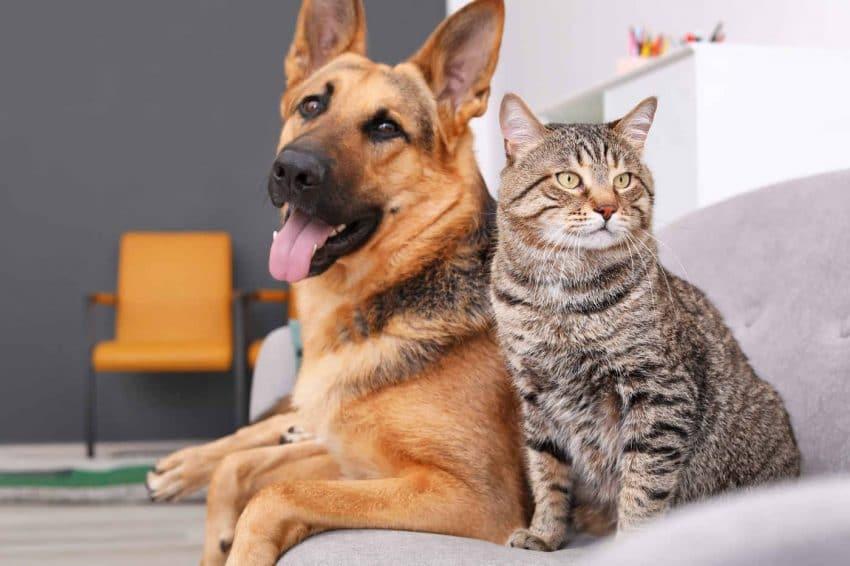Bolile rare ale animalelor de companie si tratamentele acestora – recomandarile specialistului