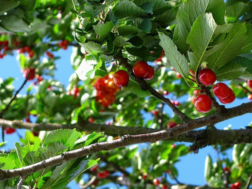 AgroMeteo 06-09 iunie. Afla starea de vegetatie a culturilor agricole si recomandari de specialitate