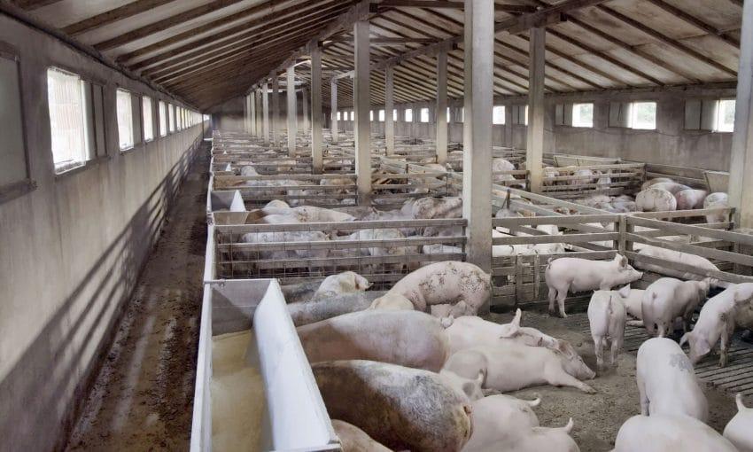 """VIDEO La ferma ieftin, la raft scump! """"Am renuntat la jumatate din efectivul de animale"""""""