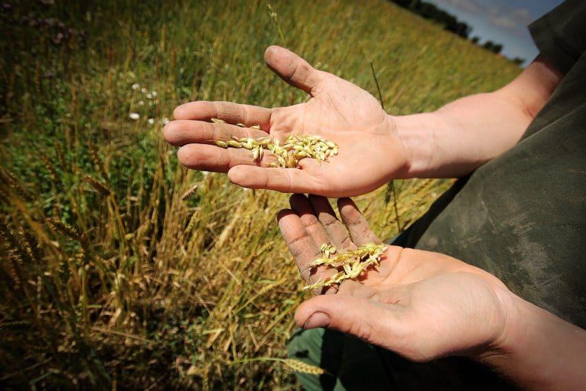 VIDEO Teama de hambare goale! Productiile de cereale vor atinge minime ISTORICE