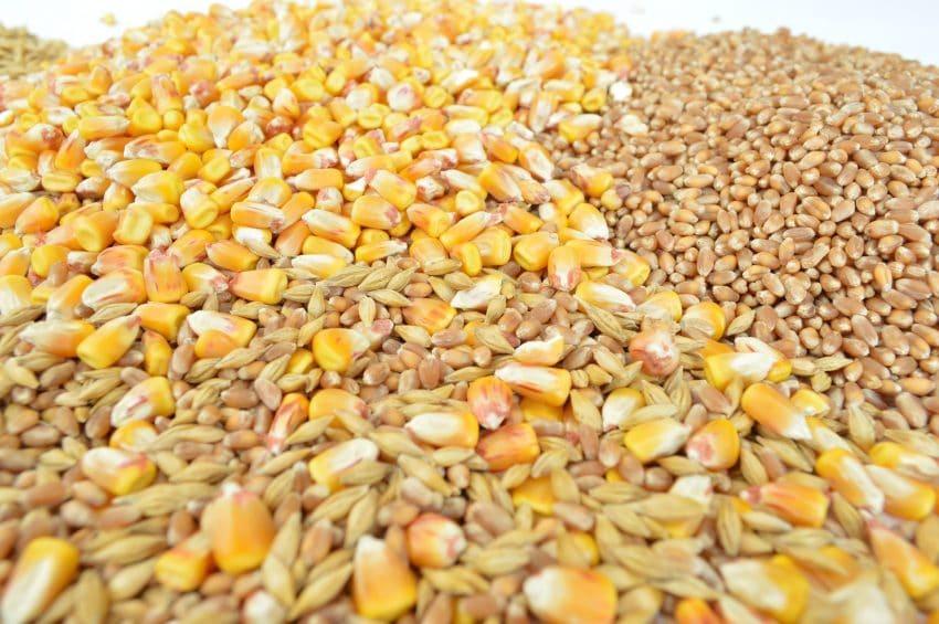 Preturile cerealelor – cu cat se cumpara astazi graul, porumbul si floarea soarelui