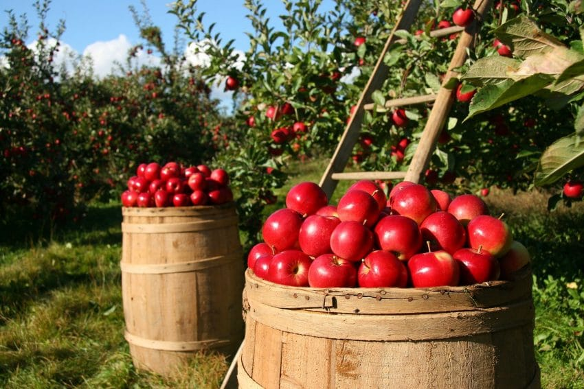 Investitii mai mari cu 50% pentru promovarea exporturilor merelor
