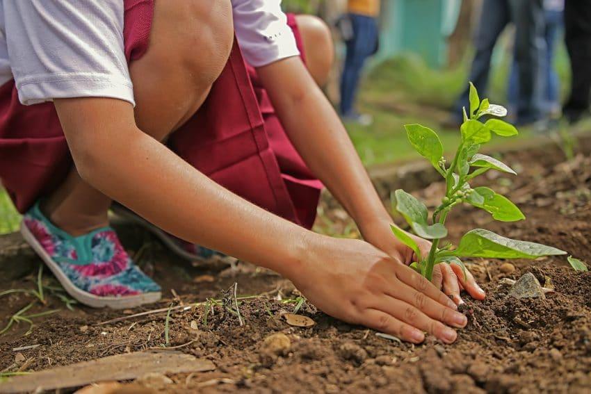 Agricultura ecologica prinde radacini in Romania