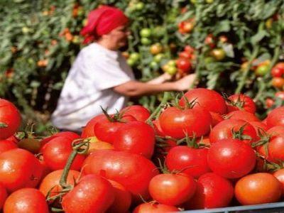 """MODIFICAREA programului """"Tomata"""" –prevederi ale actului normativ aprobat de guvern"""