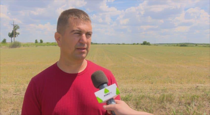 VIDEO. Semintele romanesti se pot scumpi