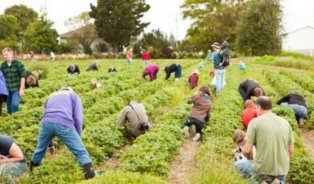 Agricultura britanica, in genunchi fara muncitorii romani! Fermierii sunt ingroziti