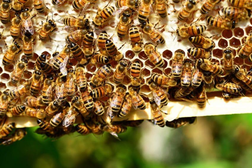 EXCLUSIV Ajutor de minimis pentru apicultori! Cati bani se aloca pe familia de albine