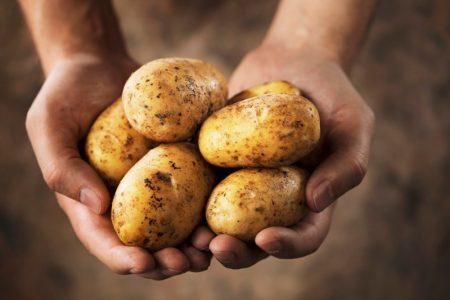 """Pretul cartofului, batjocoritor pentru fermieri. """"Nu avem de unde sa mai platim oameni"""""""
