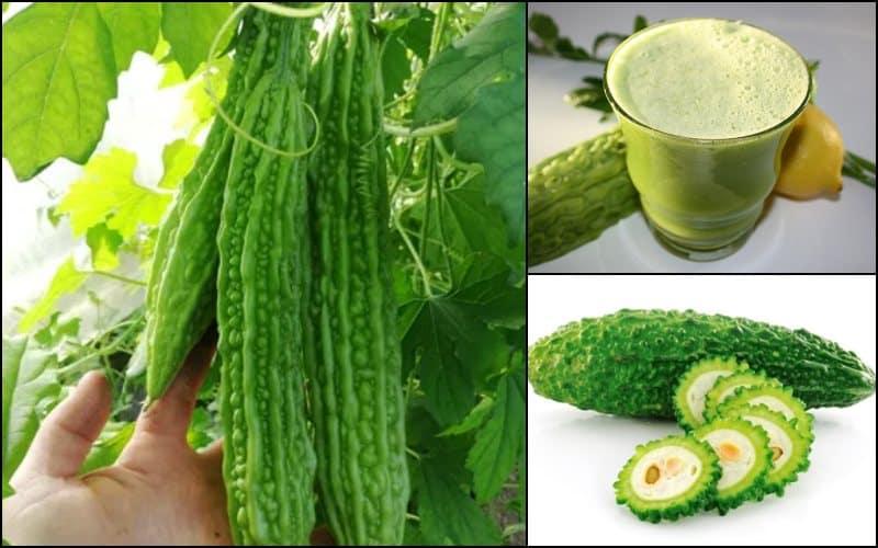VIDEO Castravetele amar – insulina vegetala produsa la Buzau