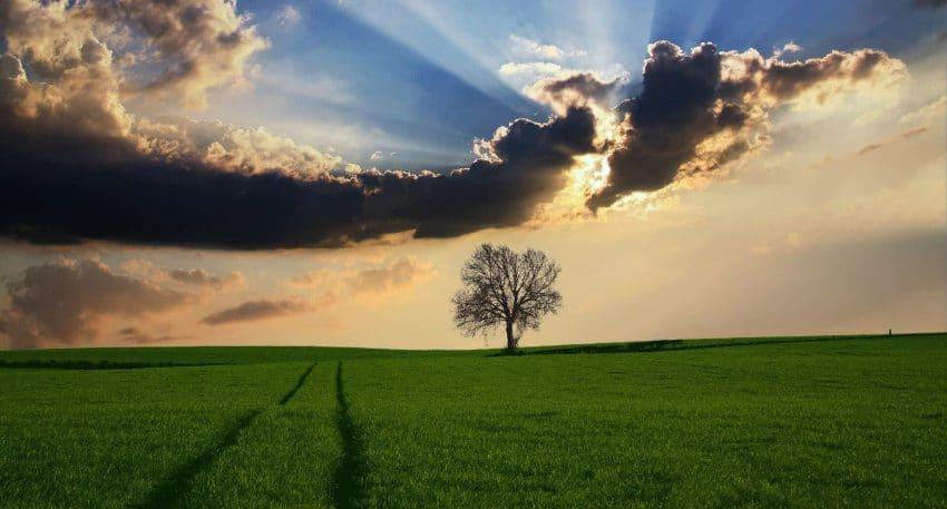 AgroMeteo Weekend: Vreme calduroasa si ploi locale. Consulta starea de vegetatie a culturilor agricole