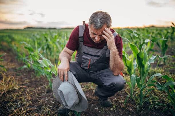 Seceta le-a pus capac! Agricultorii, nevoiti sa isi vanda fermele