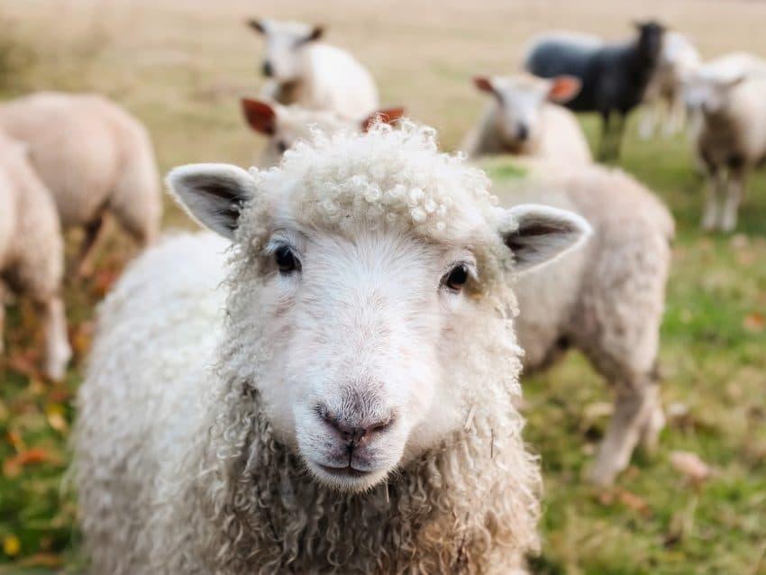 Ajutor APIA in sectorul cresterii animalelor. Actele necesare aferente cererilor de plata