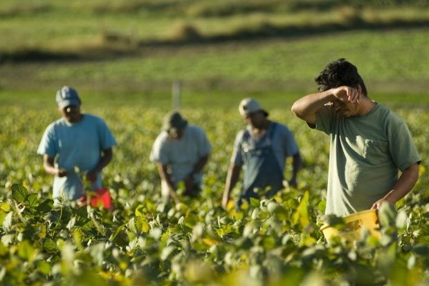 VIDEO Un fermier ofera peste 1000 EURO unui zilier si tot nu gaseste forta de munca