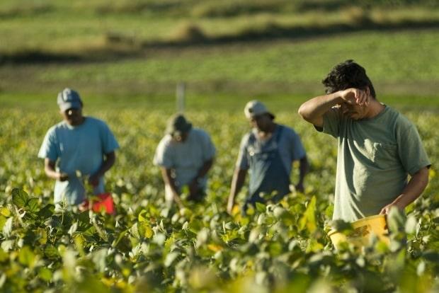 VIDEO Avem nevoie de tineri in agricultura