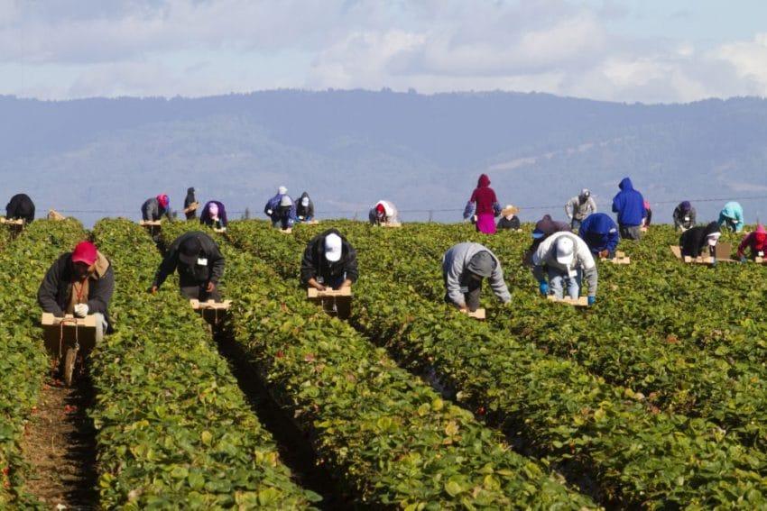 Zeci de muncitori romani infectati cu COVID-19 la o ferma din Anglia
