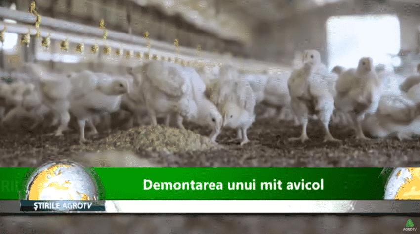 VIDEO. Demontarea unui mit avicol. Puii crescuti intensiv, benefici pentru organism sau nu?