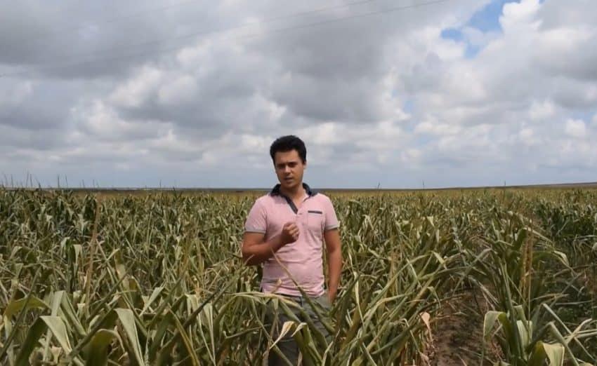 """VIDEO Lectie de agronomie! """"Am riscat, ca sa nu-mi moara plantele"""""""