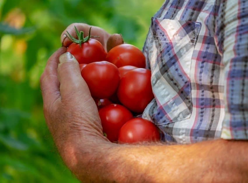 Mikro Kapital sustine initiativele micilor fermieri