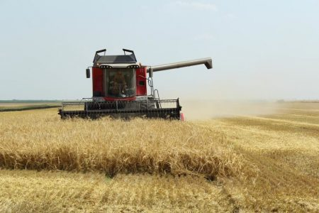 Ce se intampla cu productia de grau? Anuntul Ministrului Agriculturii