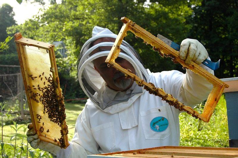 Fondurile pentru apicultori vor fi MAJORATE! Anuntul Comisiei Europene