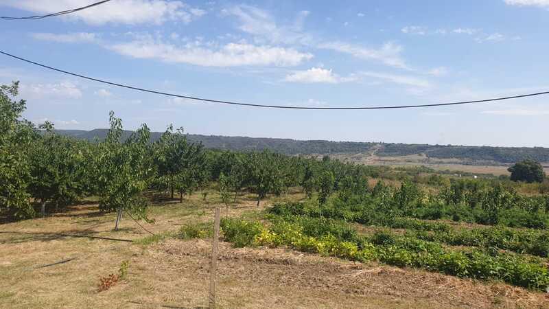 agricultura Buzau
