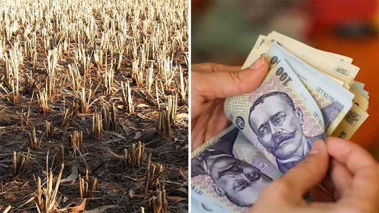 Sef APIA: Despagubirile de seceta, pana miercuri in conturile fermierilor
