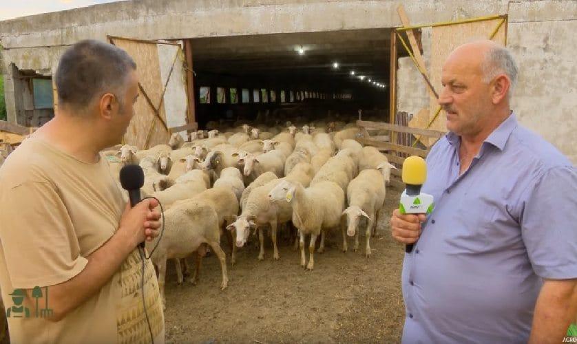 VIDEO Fratii Cioranu – Cum se obtine performanta schimband rasa de ovine