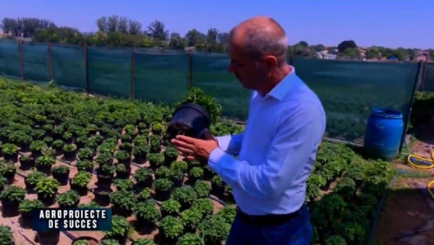 VIDEO Agroproiect de succes: Afacere cu flori de ghiveci, pusa pe picioare de un fermier constantean