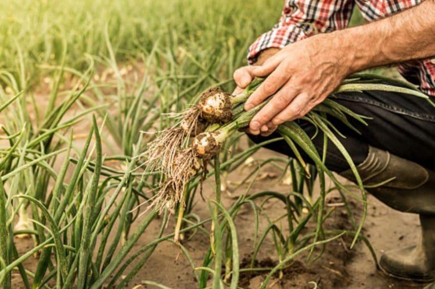 ALARMANT! Agricultura a iesit la pensie. Doar 3 persoane lucreaza pe 4% din suprafata