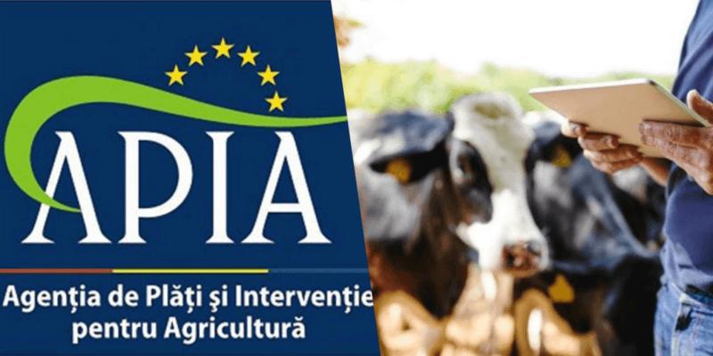 APIA anunță ASTĂZI! Banii virați în conturile crescătorilor de animale