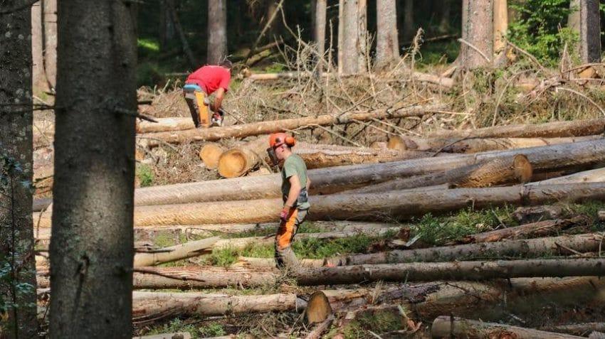 Se caută vinovații pentru defrișare într-o zonă protejată Natura 2000!