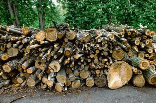 Toamna se numără… hoții! Doi pădurari, reținuți pentru furt de lemne