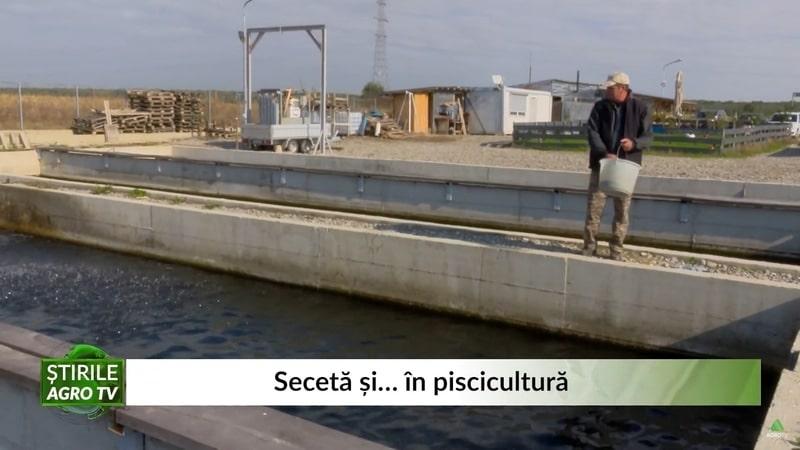 """VIDEO Pericol în pescăriile românești. """"Seceta ne-a afectat și pe noi"""""""