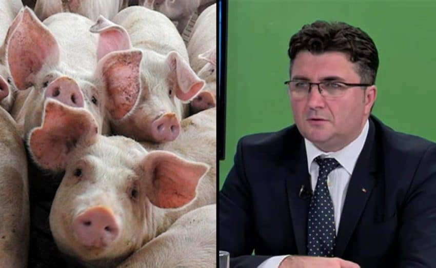 """Președintele ANSVSA: """"Adoptarea legii porcului, o URGENȚĂ MAJORĂ!"""""""