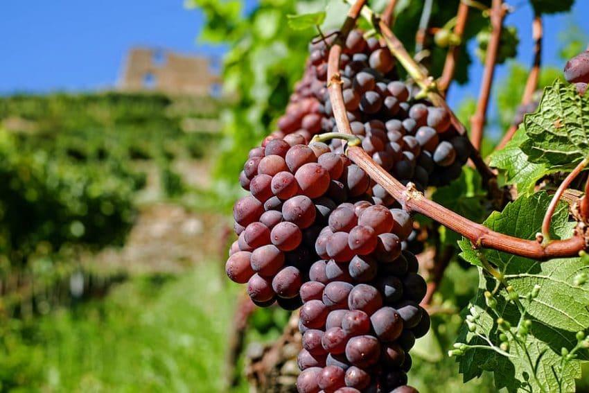 Producția de vin a Romaniei, mai mica în acest an