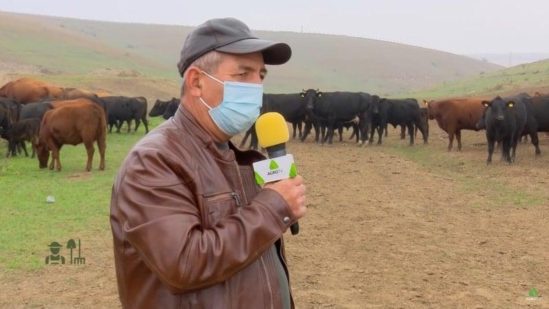 VIDEO Portret de fermier – De ce a trecut Mihalache Neamțu de la vacile de lapte la rasa Angus