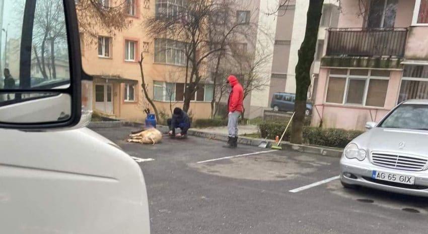 Scenariu românesc: pârleală, porc, parcare, pandemie, poliție, plată!