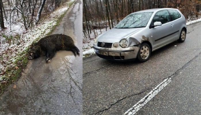 Accident mai puțin obișnuit, provocat de un mistreț