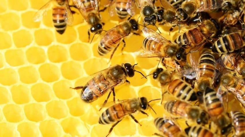 VIDEO Iarnă grea pentru apicultori. Populațiile de albine au scăzut drastic