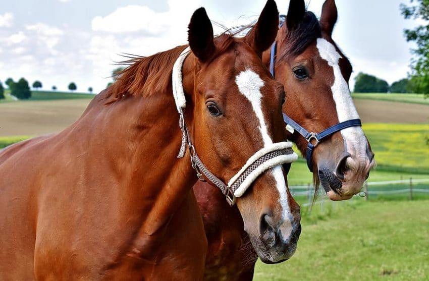 Haiducul… lui 2 cai!