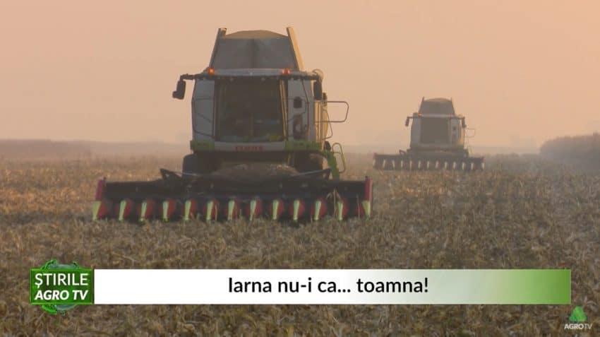 VIDEO Porumb recoltat la începutul iernii – beneficiile recoltatului tardiv